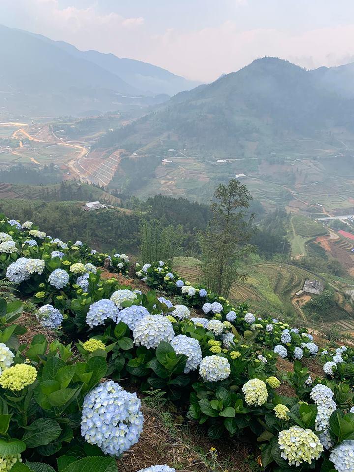 Vuon Hoa Hong Sapa (2)