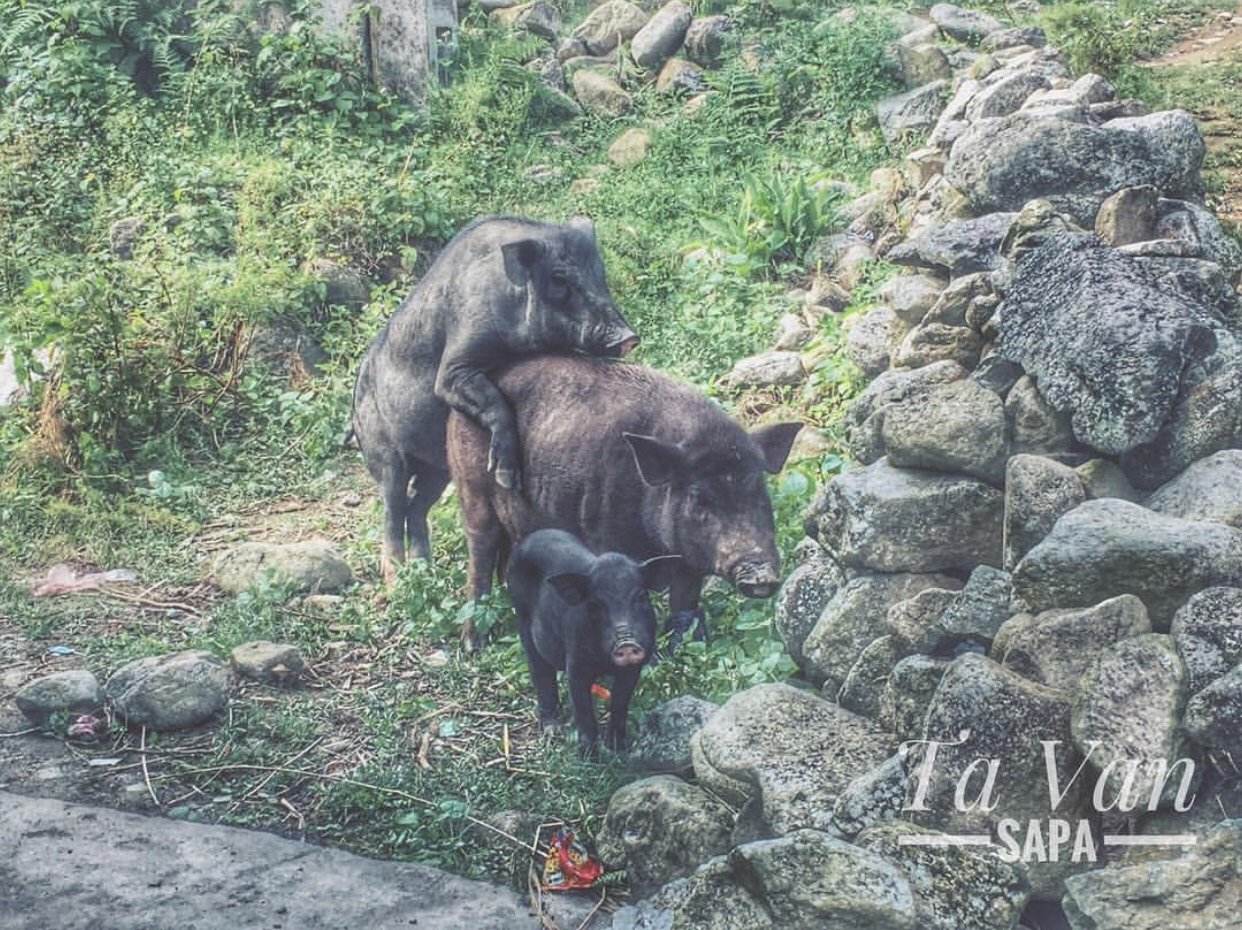 Mua Lua Chin Sapa La Thang May (4)