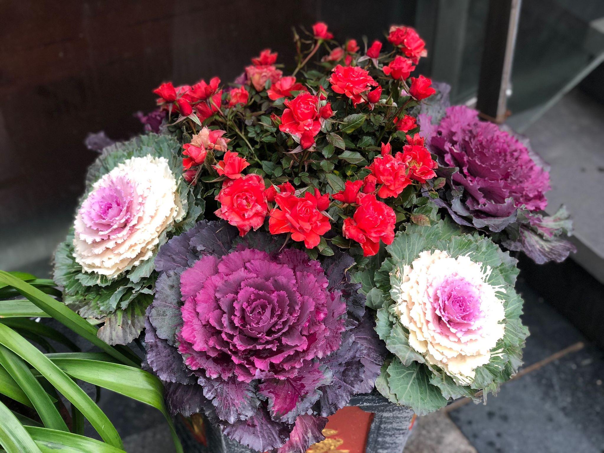Tháng 12 Sapa Có Hoa Gì đẹp (1)
