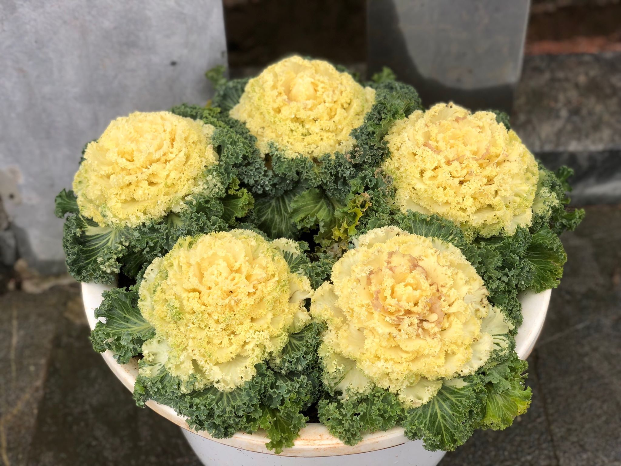 Tháng 12 Sapa Có Hoa Gì đẹp (2)